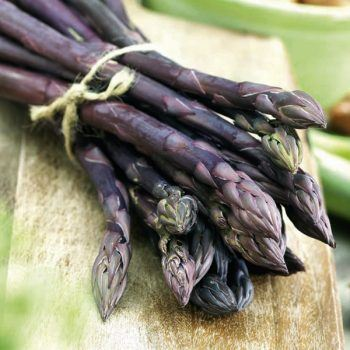 Asparagus (Stewarts Purple) | Asparagus Plants for Sale